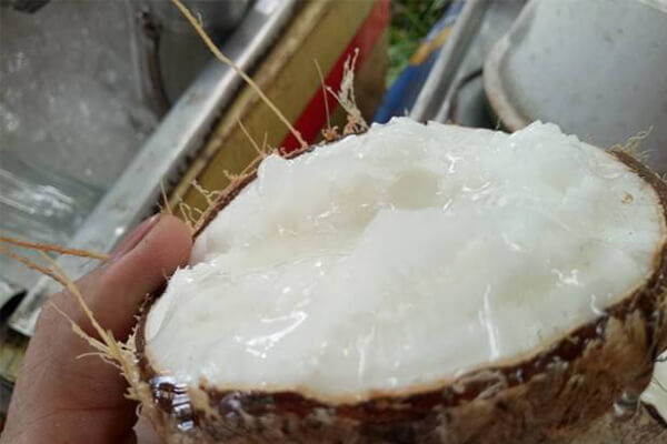 Một trái dừa sáp ở Trà Vinh bằng 20 trái dừa bình thường và khi hút hàng giá tăng đến 250.000 đồng/trái.