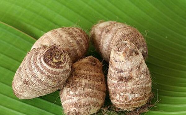 Cây khoai sọ có 2 loại củ: củ cái và củ non.