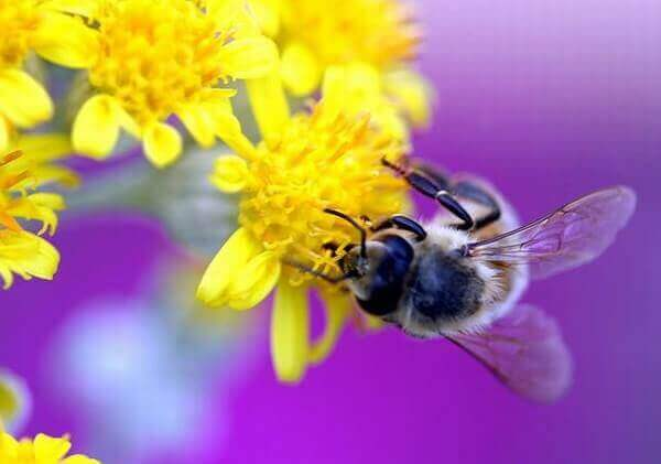 Mật ong rừng dùng làm đẹp da