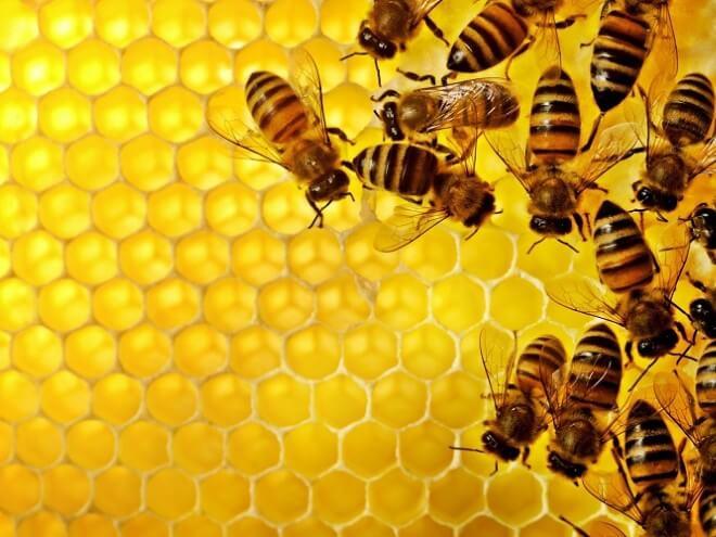 Mật ong nguyên chất có tác dụng gì đối với sức khỏe, chữa bệnh?