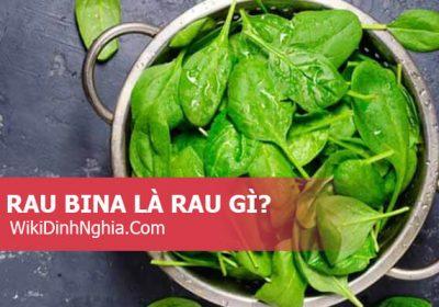 Rau bina là rau gì, có thể mua ở đâu, Rau bina có tác dụng gì và nấu món gì ngon?