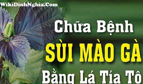la tia to co the chua sui mao ga
