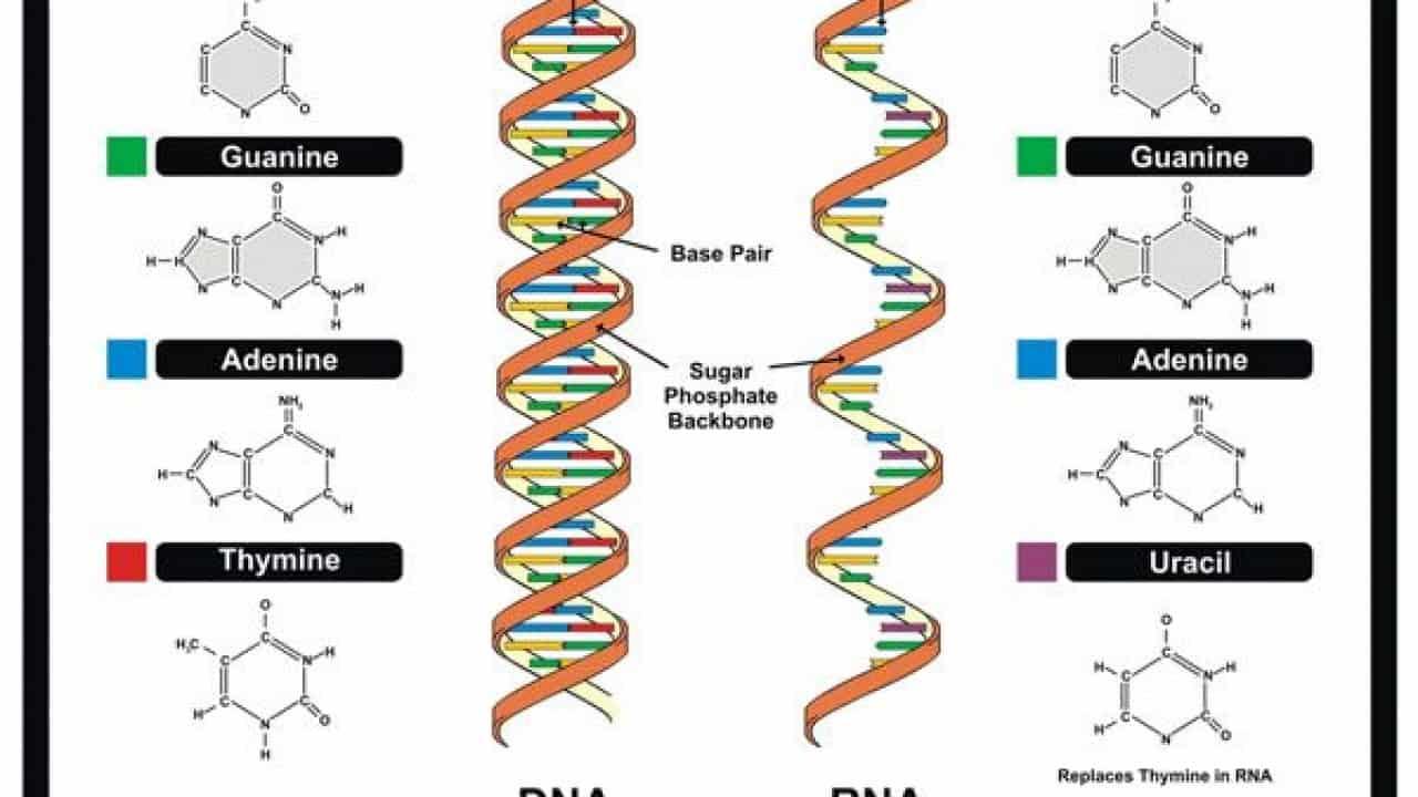 Tổng Hợp Tất Cả Các Lý Thuyết Bài Tập Và Công Thức Tính ADN 2