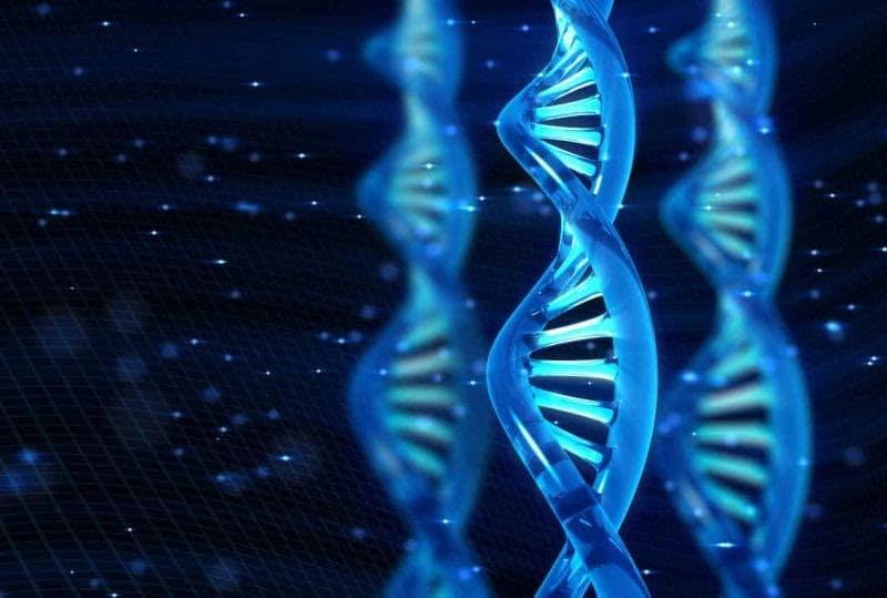 Tổng Hợp Tất Cả Các Lý Thuyết Bài Tập Và Công Thức Tính ADN 3